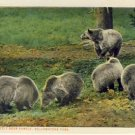 Grizzly Bear Family Yellowstone Park Postcard VP-1873