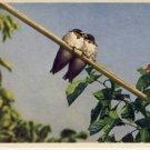 Gygor Birds on a Wire Vintage Swiss Postcard VP-5752