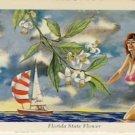 FLORIDA State Flower Glamour Gal Postcard VP-6146