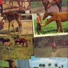 Wonderful Lot of 14 Mixed Horses Postcards VP-2656