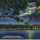 Moonlight Scene in FL across Lake Postcard VP-6474