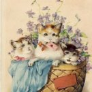 3 Cute Kittens in a Basket Vintage Postcard VP-6046