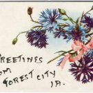Greetings From FOREST CITY, IOWA Postcard VP-6042