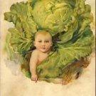 Baby Boy EMBOSSED CABBAGE German Postcard VP-6572