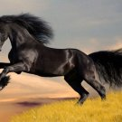 Friesian BLack Horse Cross Stitch Pattern***L@@K***