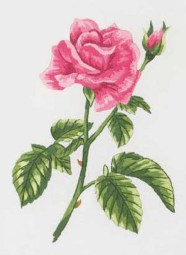Beautiful Pink Rose Cross Stitch Pattern***L@@K***