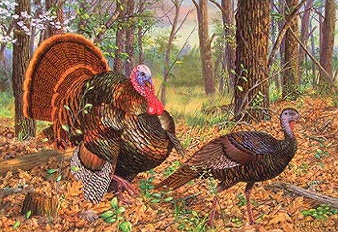 Turkeys In The Woods Cross Stitch Pattern***L@@K***