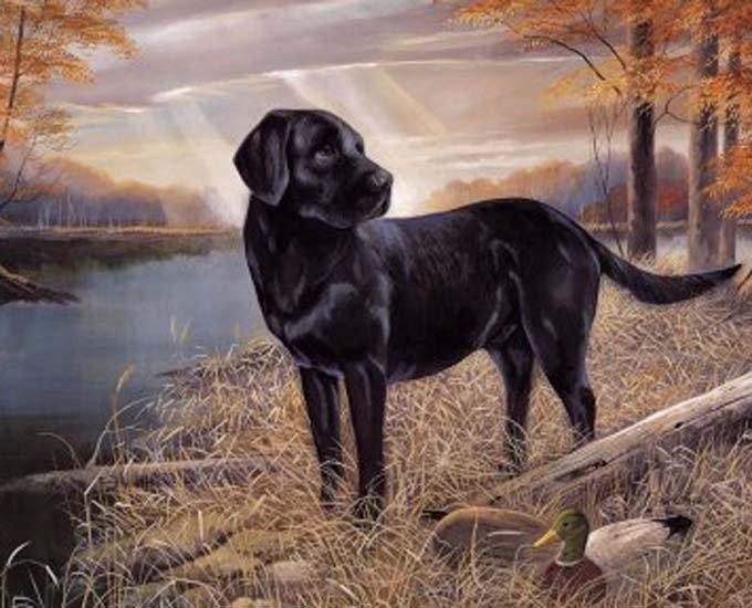 Labrador Retriever Cross Stitch Pattern***L@@K*** ~~ I SEND WORLD-WIDE ~~Free