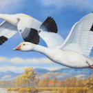 A Pair Of Lesser Snow Geese Cross Stitch Pattern***L@@K***