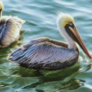 Pelican Pair Cross Stitch Pattern***L@@K***