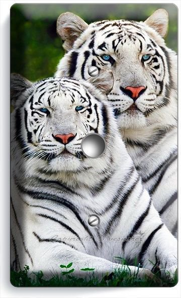 WILD WHITE BENGAL TIGERS LIGHT DIMMER VIDEO CABLE WALL PLATE ROOM ART HOME DECOR