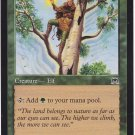 Wirewood Elf (MTG) - Near Mint