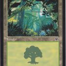 Forest 347 (MTG) - Near Mint