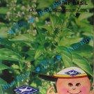 Hairy Basil : Thai Herbal Vegetable Seeds