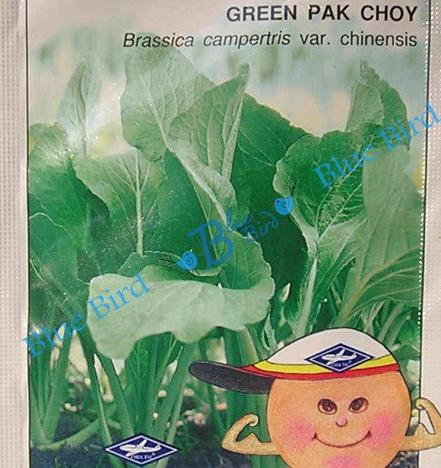 Green Pak Choy - Asian Vegetable Seeds w S&H Free