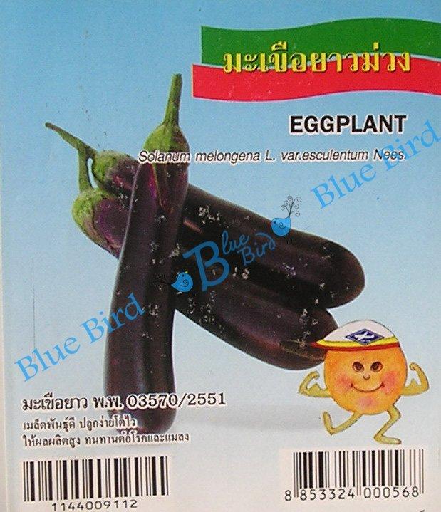 Long Purple Thai Eggplant: Asian Vegetable Seeds w S&H Free