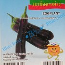 Long Purple Thai Eggplant: Asian Vegetable Seeds w S&H Free