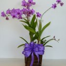 Orchid_1