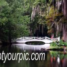 Magnolia Plantation Original Photography 11x14