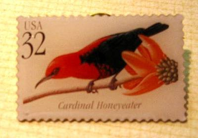 Cardinal Honeyeater Tropical Bird stamp pin lapel 3225