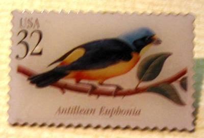 Antillean Euphonia Tropical Bird stamp pin lapel 3222