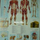 Human Body Biology Physiology Anatomy Medical Science Chart Educational POSTER 21.5x31 Inch