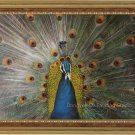 ART ORIGINAL OIL ON CANVAS ANIMAL-Peacock In His Pride