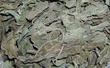 Salvia Divinorum Oaxacan Dried Leaves 1/2 Ounce