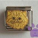 Cream Persian Kitty Cat Italian Charm Longhair Kitten