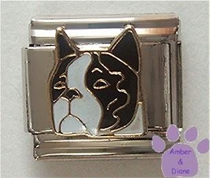 Adorable Boston Terrier Dog Italian Charm
