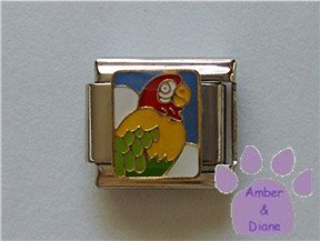 Parrot Italian Charm Macaw for a Bird Lover