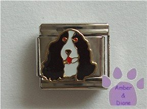 Springer Spaniel Dog Italian Charm Black and White