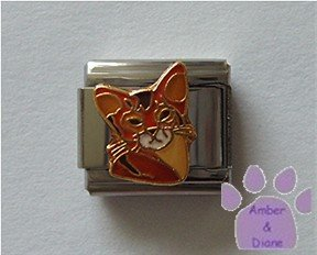 Abyssinian Cat Italian Charm kitty face