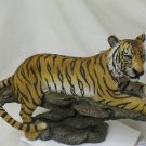 Bangle Tiger Lying On Rock
