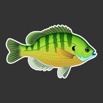 Bluegill, Bream, Panfish Fishing Decal