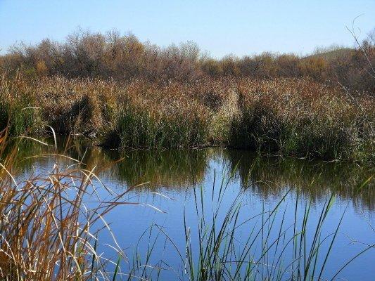 Reed Pond Along The Az Gila River 8x10 Print