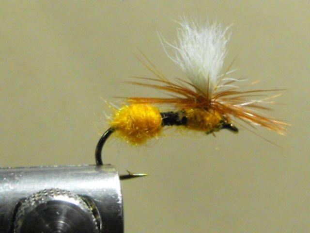 Ant , Orange - Parachute