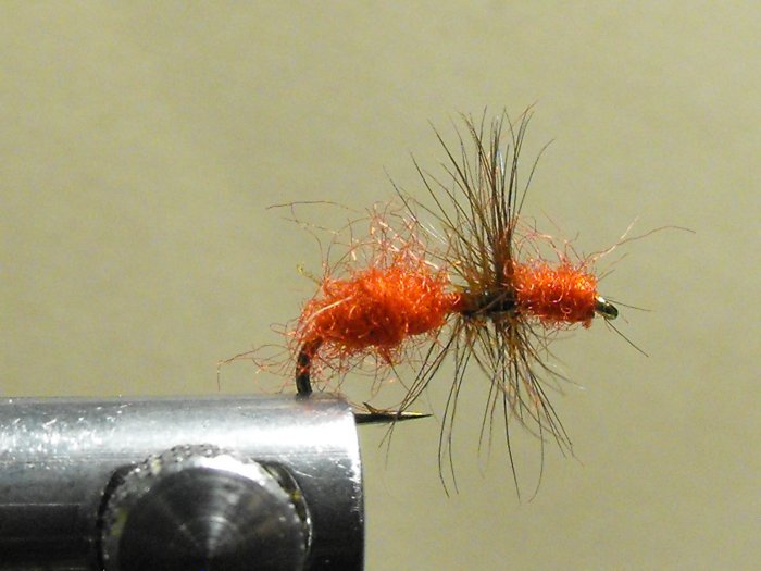 Ant, Red - Wingless