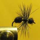 Ant, Black - Wingless