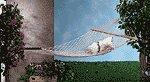 Cotton Hammock -33024