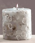 Scented Candle - Assorted Shells -30094