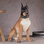 Alabastrite Large Boxer Dog -30422