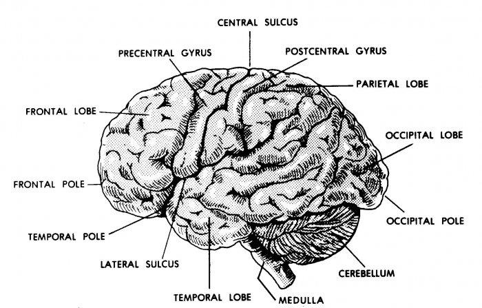 Medical Terminology, Basic Human Anatomy, Physiology, STD, Obstetrics (5 docs) on CD/DVD