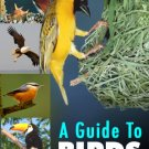 A Guide To Birds
