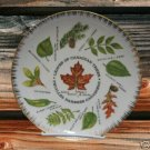 VINTAGE LEAVES OF CANADA PLATE GIFT CRAFT MID 1940's