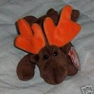 Chocolate the Moose Ty  Beanie Babies Collectible