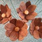 Redwood Flower #1800