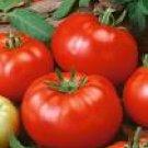 Beefsteak Tomato Seeds - 50