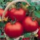 Cal Ace Tomato Seeds - 50