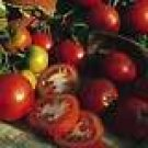 Sub Artic Plenty Tomato Seeds - 50